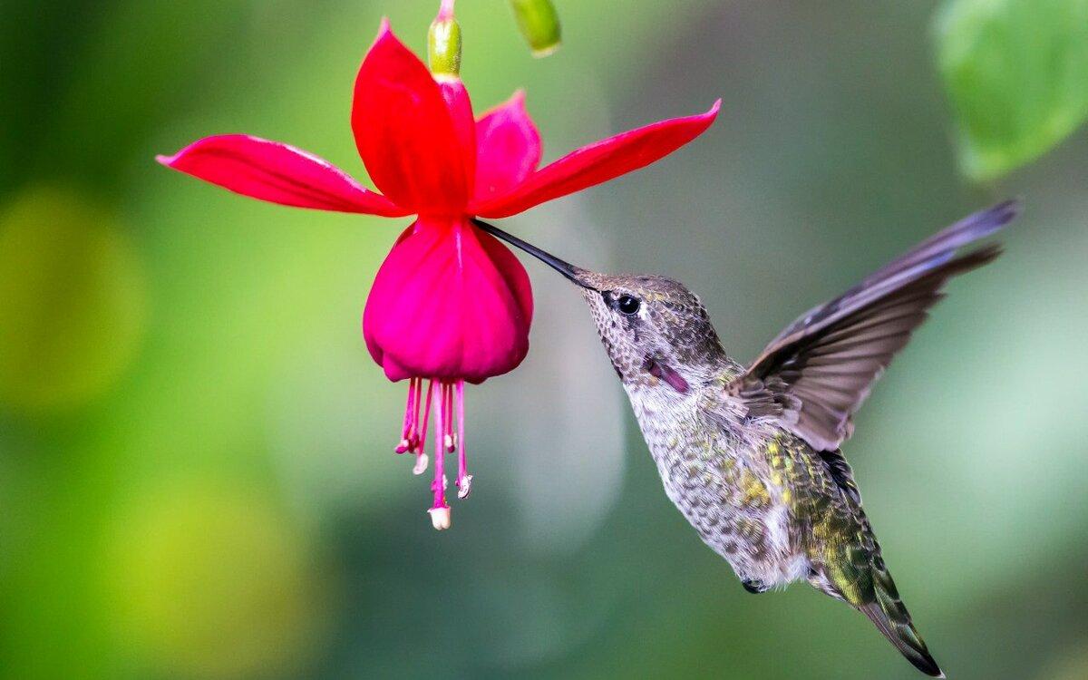 тоже сделайте расцветки колибри фото тех пор