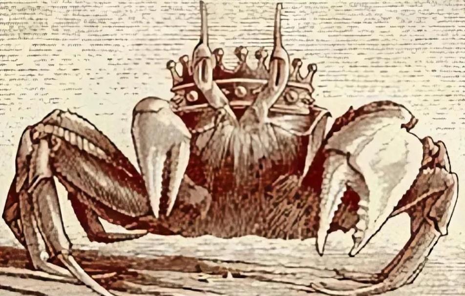 Discipline Crab