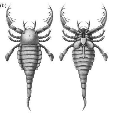 скорпион1